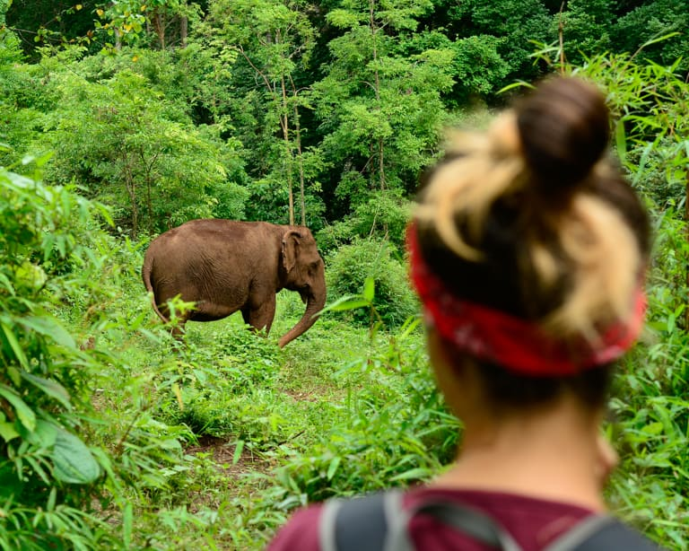 Ethical Elephant Experiences | Half Day - 1 Week | from SEN MONOROM, CAMBODIA