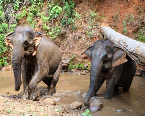 Elephants in natural pool
