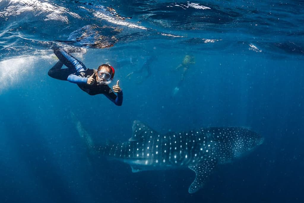 Girl swims with whale sharks