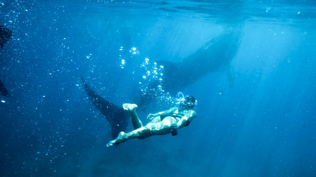 Swimming with Whale Sharks in Asia - The Ethics