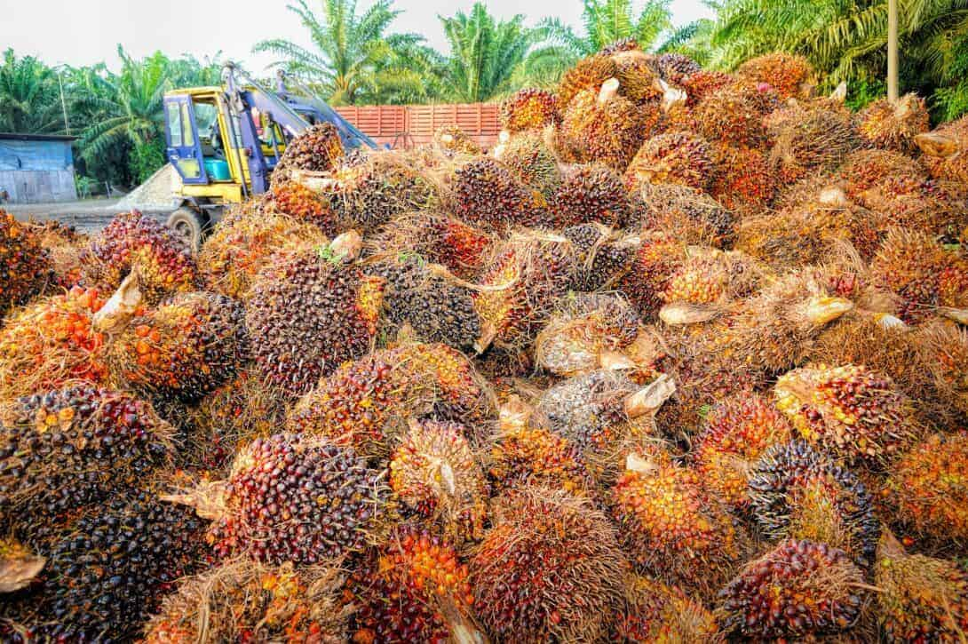 Palm Oil Production in Asia