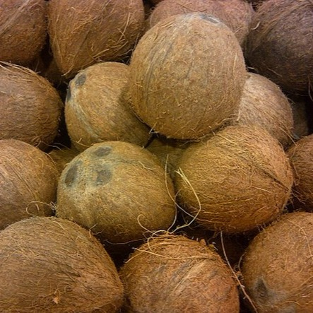 BingoFresh Premium Coconut (Thenga)