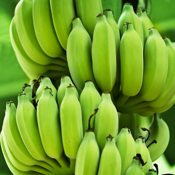 BingoFresh Premium Raw Banana (Vazhaykka)