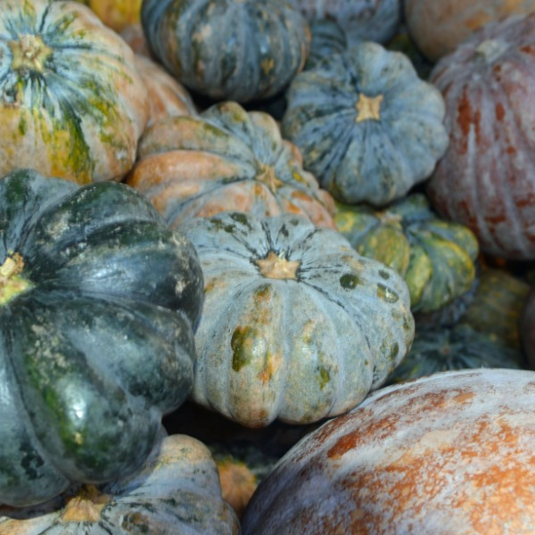 BingoFresh Premium Pumpkin (Mathanga)