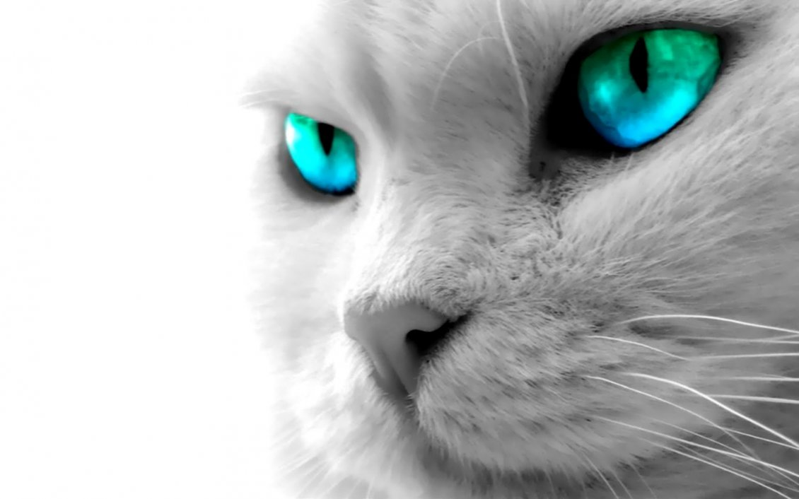 Beautiful Cat Images Hd Wallpaper Download