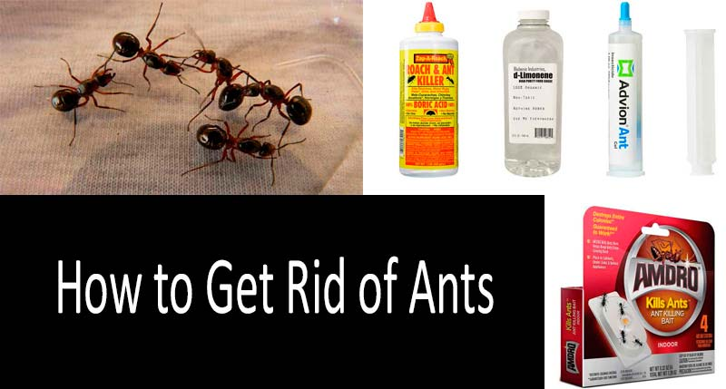 Kill Ants In House 6
