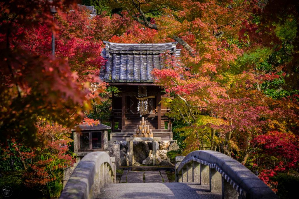 Best Autumn Leaves Spots in Kyoto #5 - Eikan-do Temple