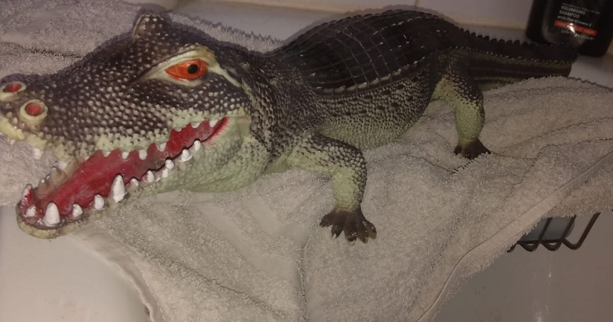 Terrified woman calls RSPCA over alligator in bath – only to discover it's a toy