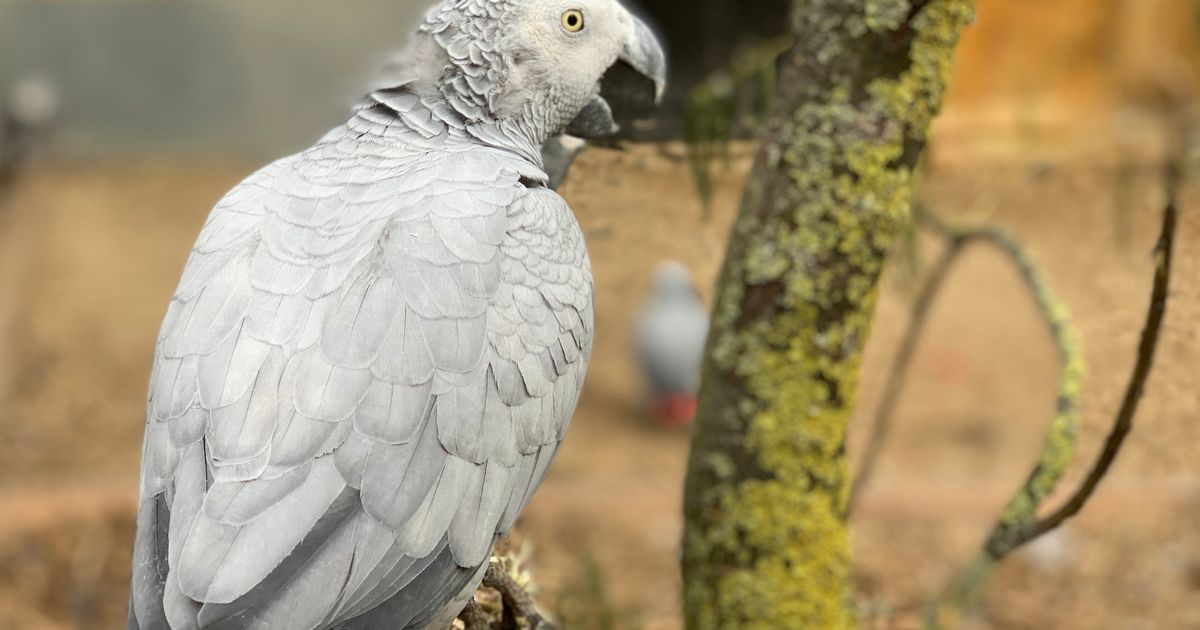 Parrots separated at park because they keep swearing at the customers