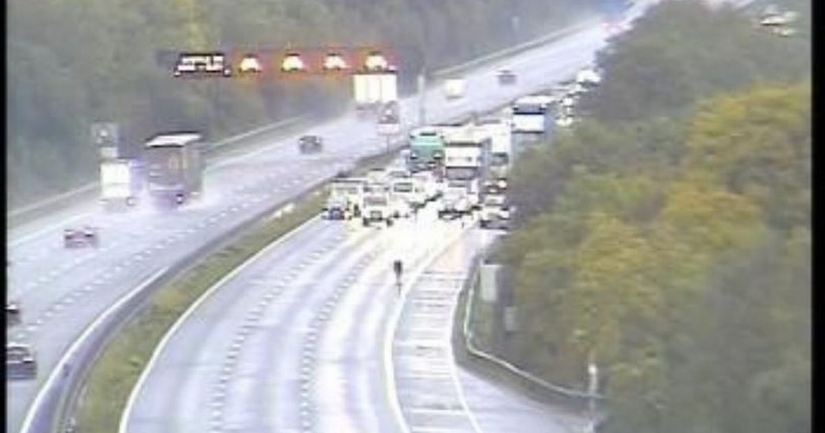 'Moo-ve' - Cow caused chaos on M5 as it walks into the motorway