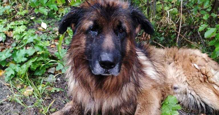 Dog digs himself out of grave and seeks help after cruel owners buried him alive