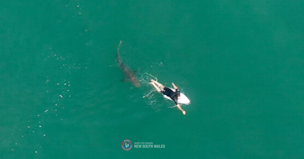 Great white shark comes within inches of surfer in chilling drone footage