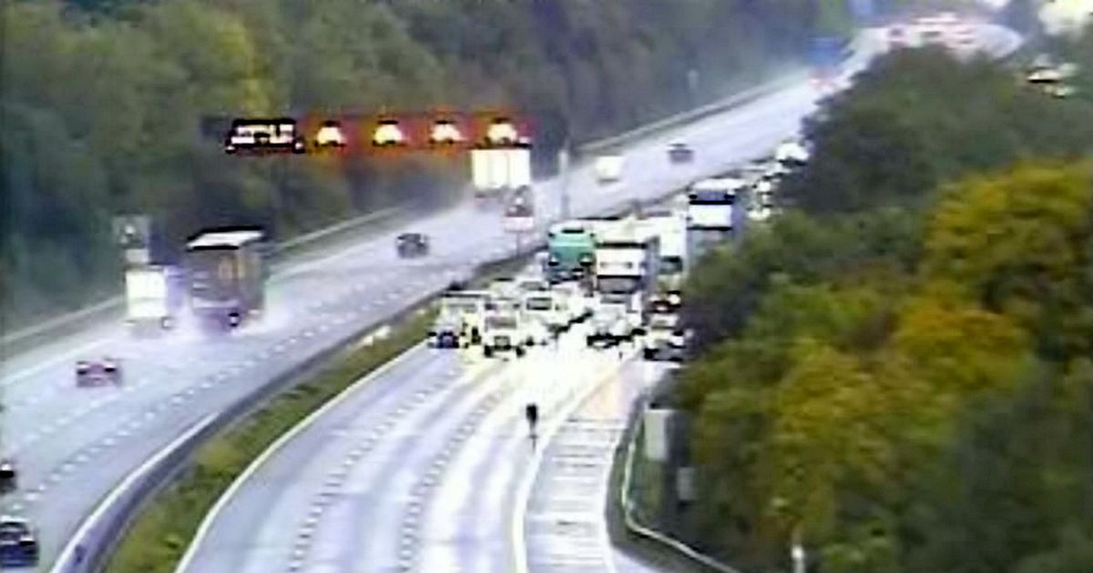 Motorway brought to a standstill thanks to cow