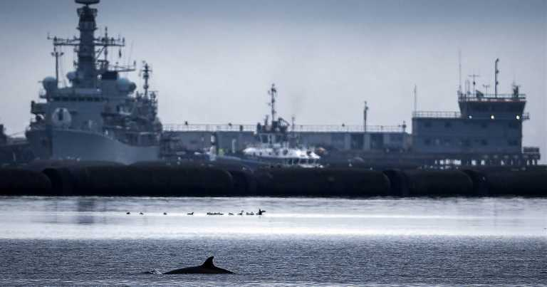 No monster: Rescuers try to shoo whales away from Scottish loch