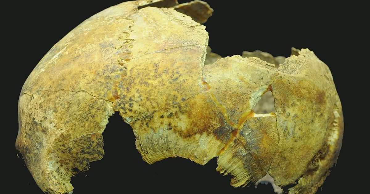 Skull of 5,000-year-old man who had brain surgery with stone 'scalpel' unearthed