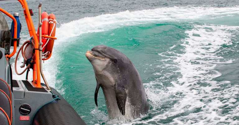 Hope for Fungie the missing dolphin as expert explains what could have happened