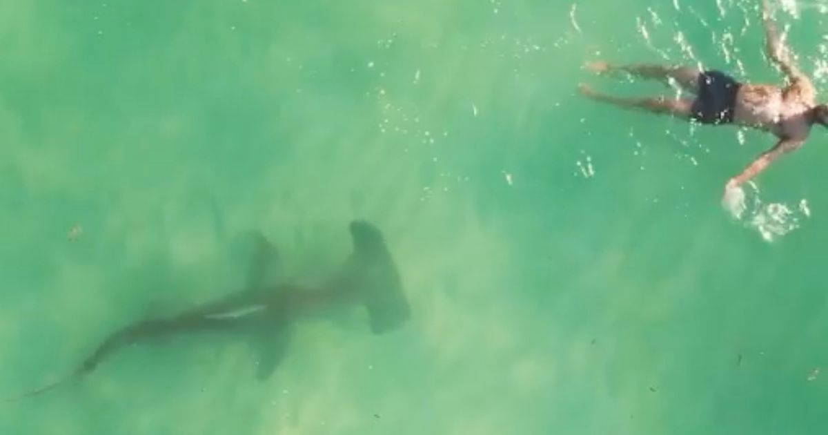 Huge shark circles man enjoying a swim - and he has no idea it's there