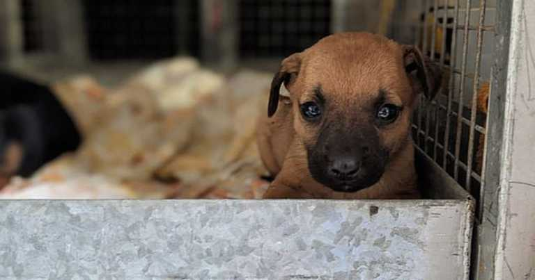 Puppies eaten alive by maggots after being dumped in bin but others survive