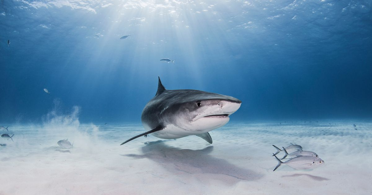 Tourist killed in shark attack after beast tore off her leg off in Caribbean