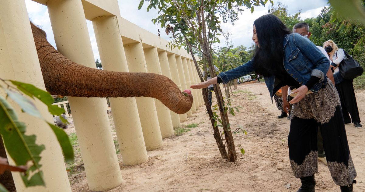 World's loneliest elephant has love interest in new home after Cher legal battle