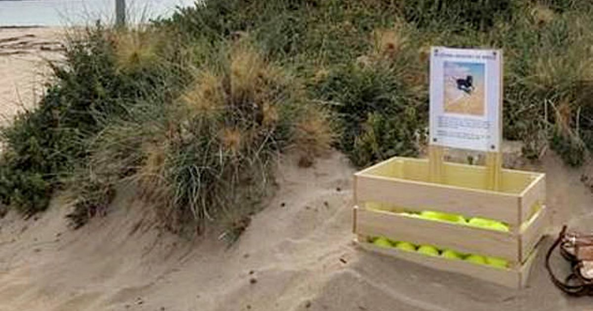 Dog owner builds memorial to lost pet on beach and leaves heartbreaking note