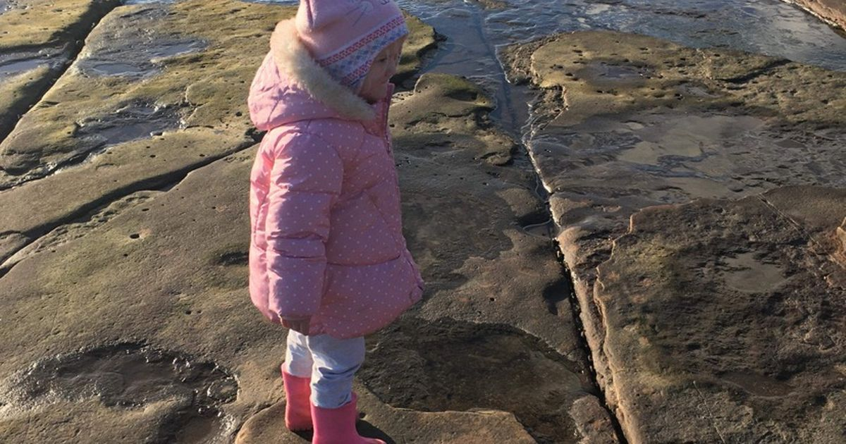 Four-year-old discovers dinosaur footprint on Wales beach