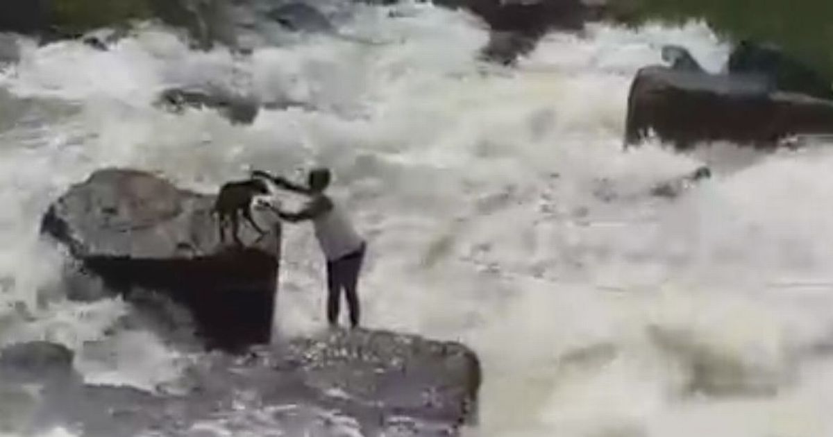 Heroic passer-by risks own life to save dog from drowning in freezing dam waters