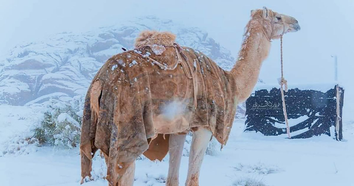 Incredible pictures of ice-covered Sahara Desert as temperatures plummet to -3C