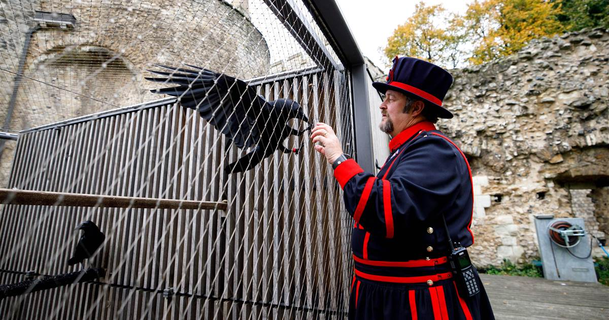 Legend has it Tower of London must keep 6 ravens or kingdom will fall. Now one is missing.