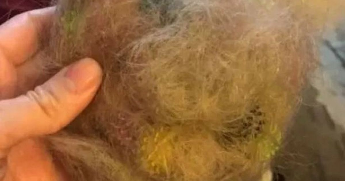 Parent call for Bunchems ban after toy gets stuck in child's hair