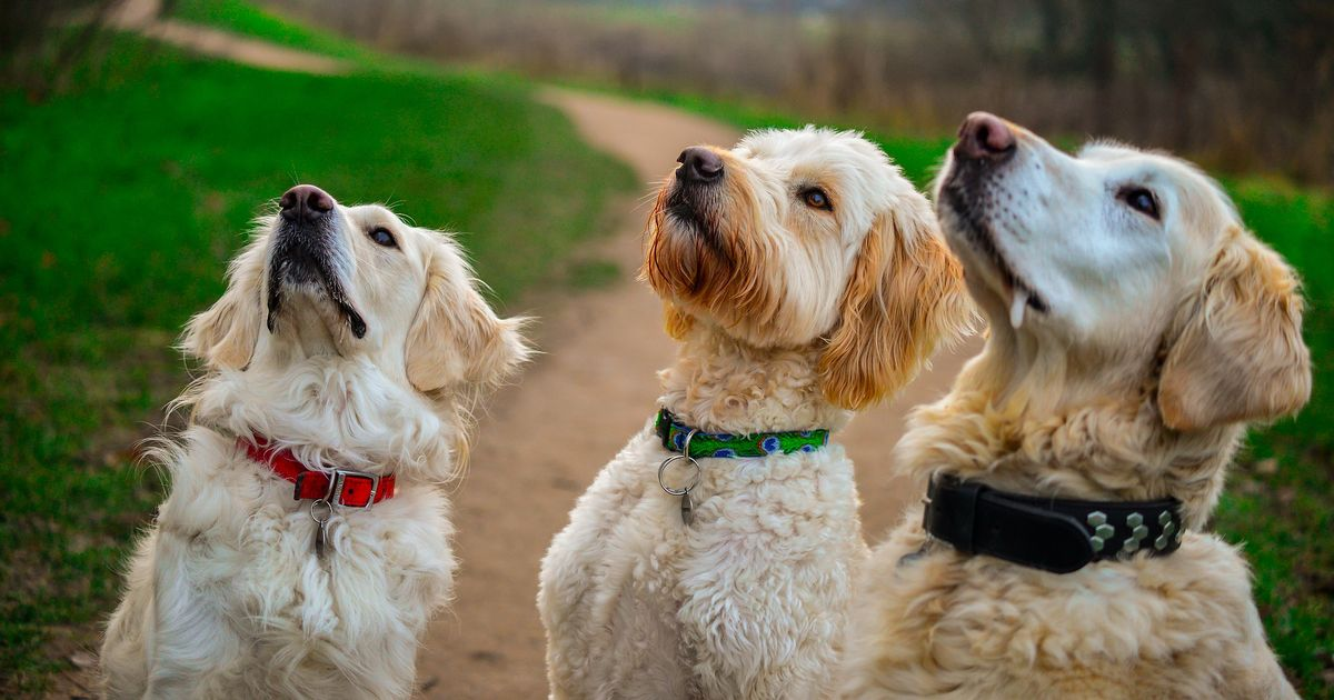 Pets should get Covid vaccine in future to curb spread of virus