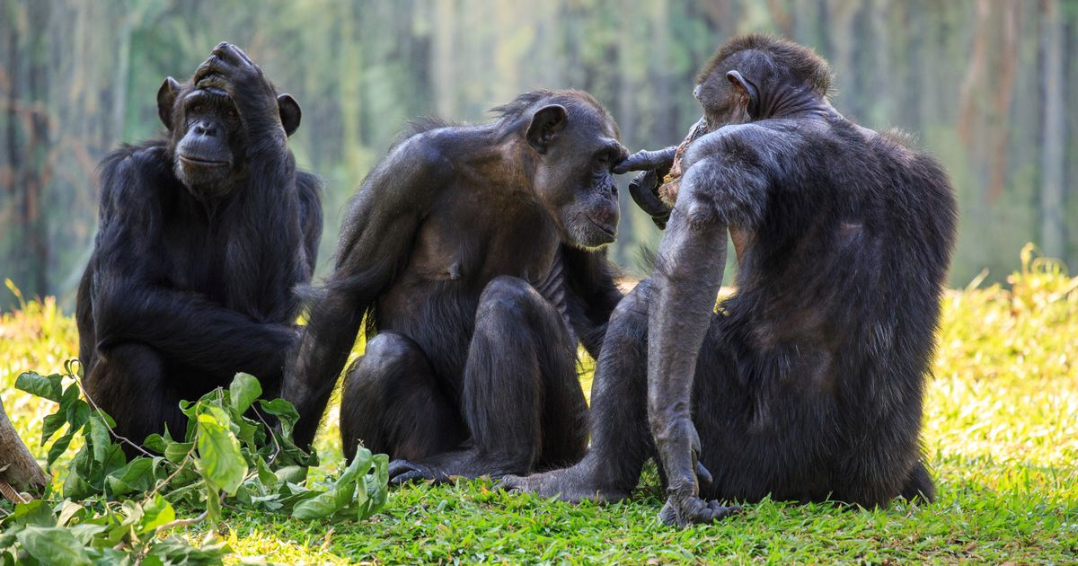 Scientist says first AIDS victim 'was starving man forced to hunt chimps to eat'