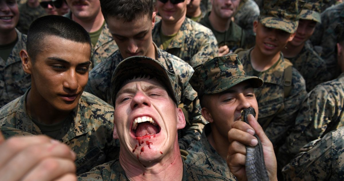 Calls to end gruesome army drills where marines eat geckos and drink snake blood
