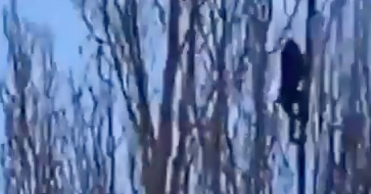 Exotic monkey escapes from zoo enclosure and climbs tree in bid to dodge police
