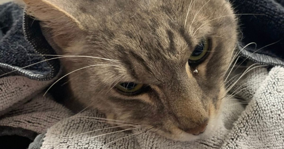 Hero family cat dies trying to protect young children from dangerous snake