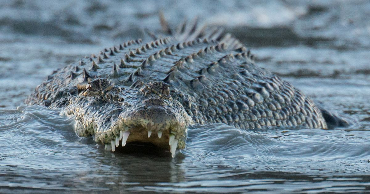 Human remains found in crocodile captured near missing fisherman's boat
