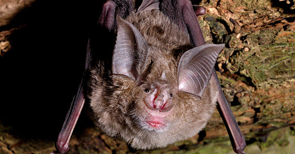 Lab in Covid-hit Wuhan 'designed bat breeding cages for virus experiments'