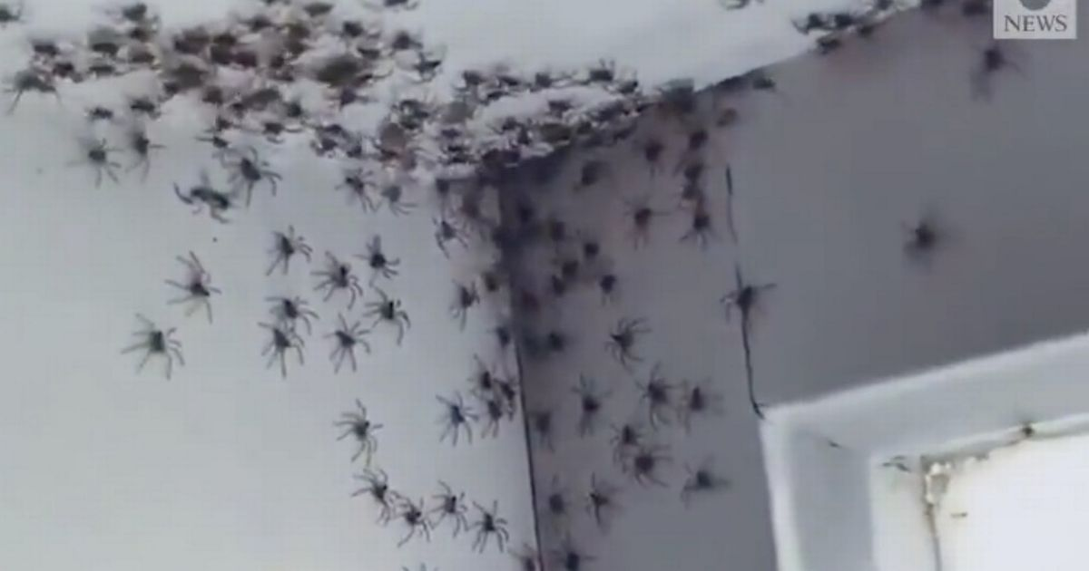 """Mum asks """"should we burn the house down"""" as spiders infest daughter's bedroom"""