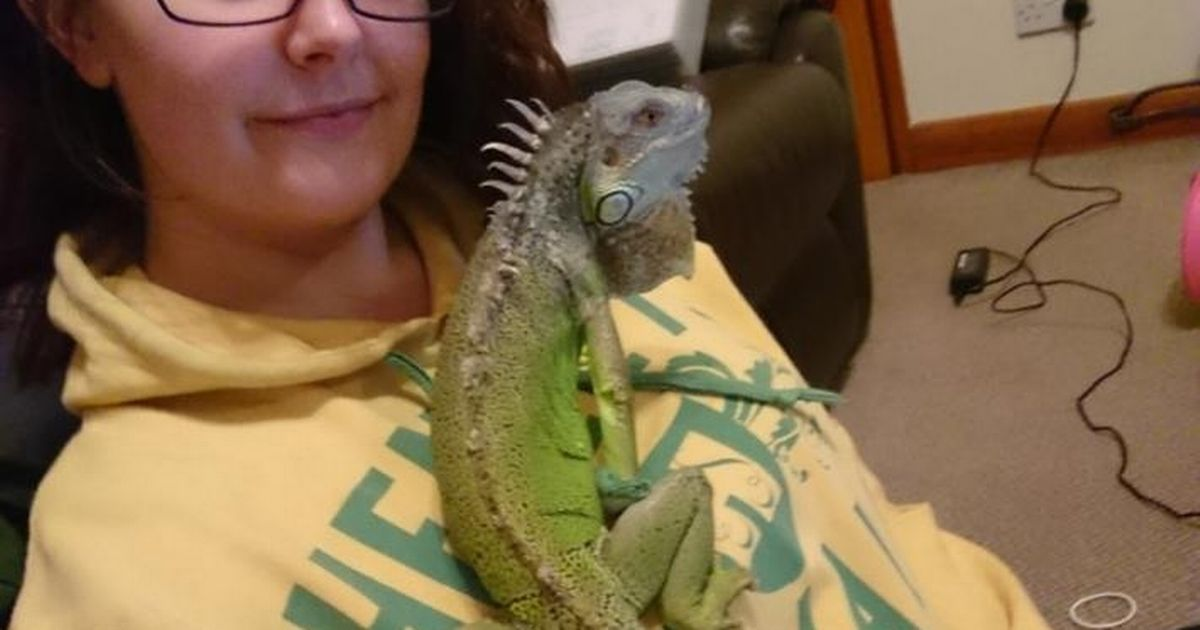 Pet iguana Frank 'came back from the dead' at crematorium