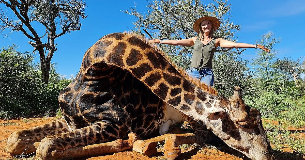 Trophy hunter poses with 'Valentine's gift' - the heart of giraffe she just shot