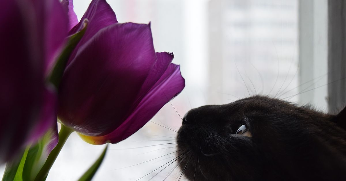 Vets' warning over 11 flowers you should never give to a cat owner