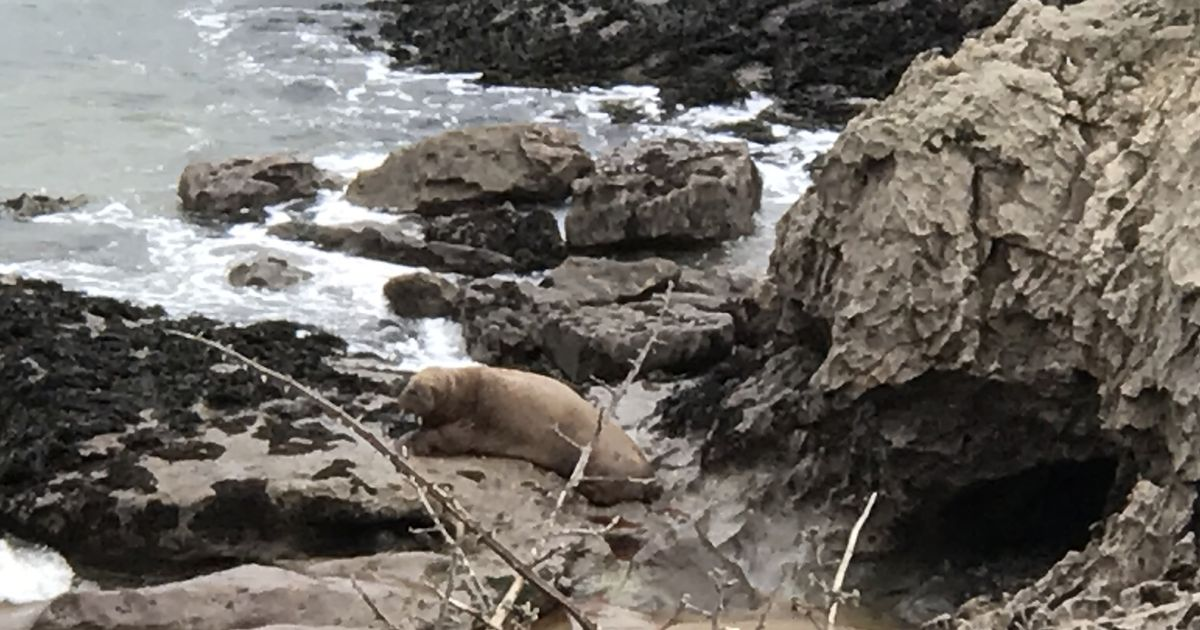 Arctic walrus spotted off the coast of South Wales