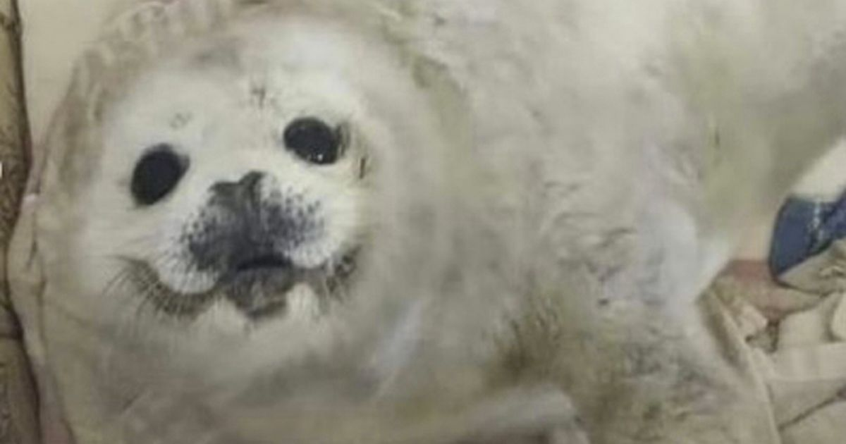 Baby seal 'petted to death' by crowds who manhandled tiny creature for hours