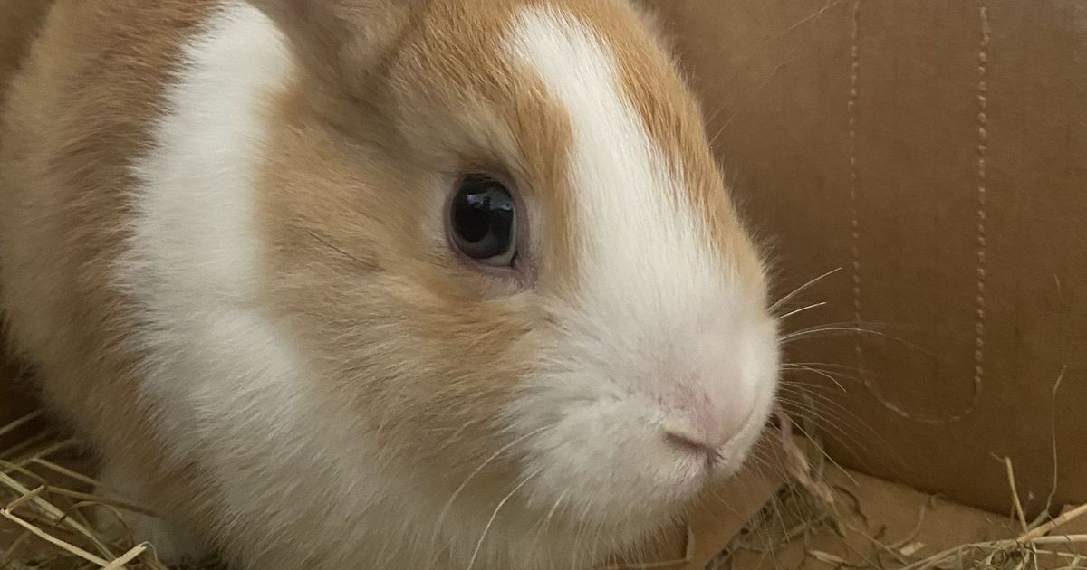 CCTV shows home invaders were actually a 'ninja' bunny