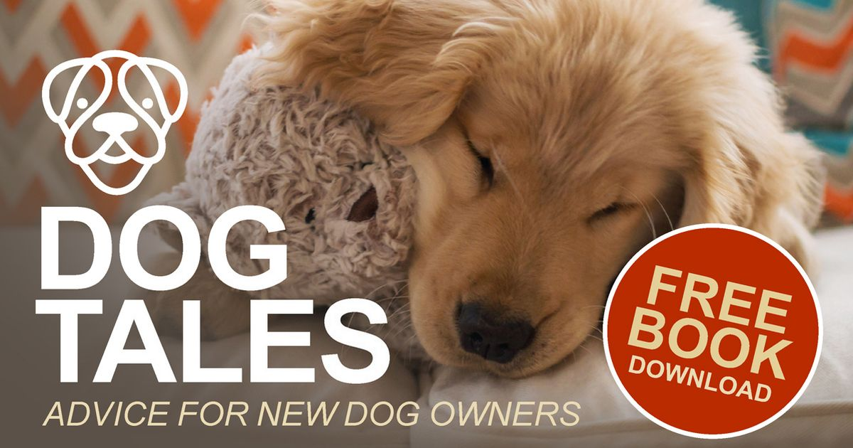 Dog owners share advice and tips on getting a dog in free digital book