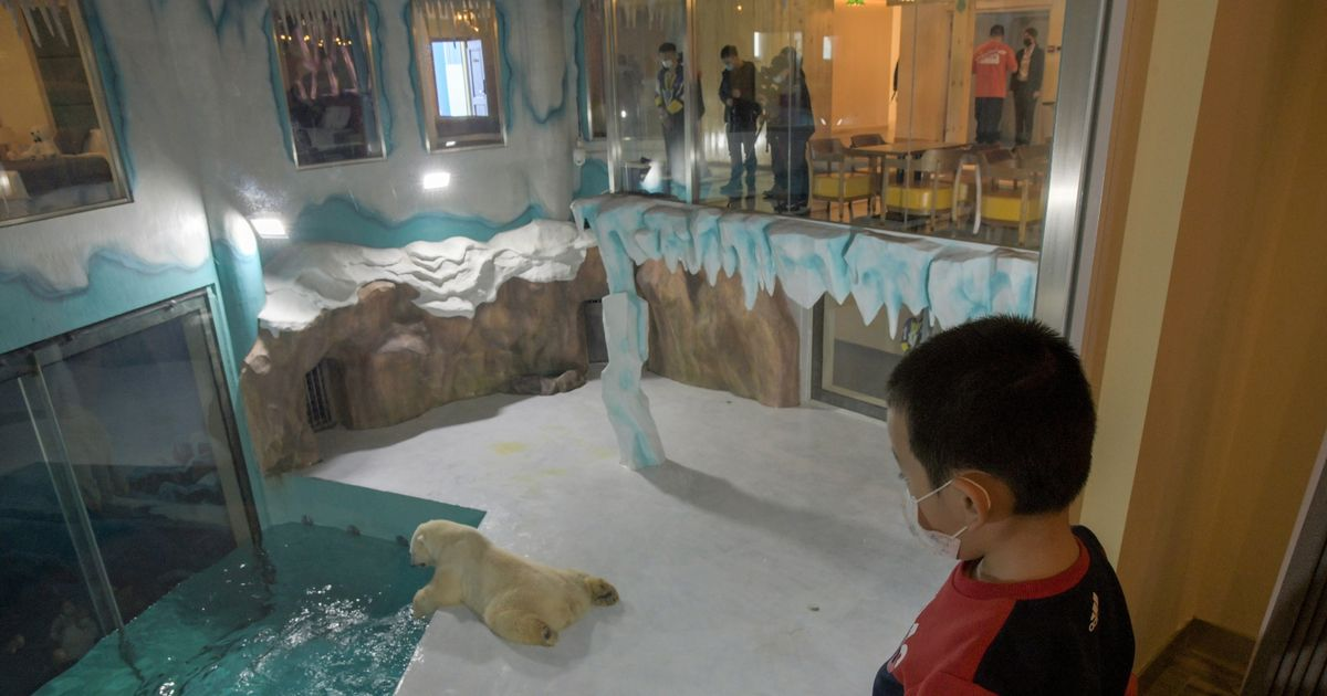Fury at first 'polar bear hotel' profiting from 'misery' of threatened species