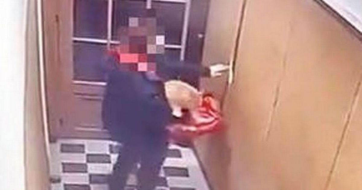 Just Eat driver steals cat from flats 'to deal with restaurant mice infestation'