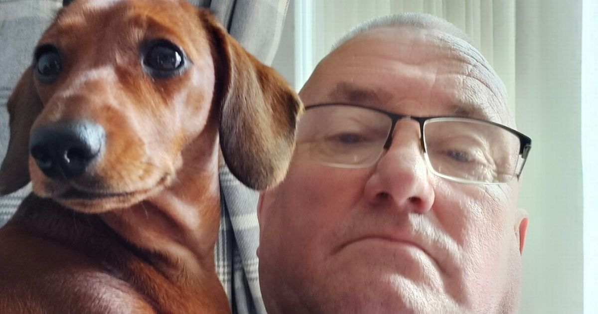 Pet owner issues daffodil warning after dog ends up severely ill