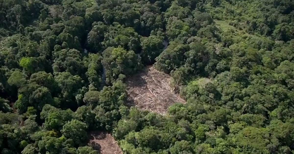 Study says two-thirds of world's rainforest destroyed or degraded