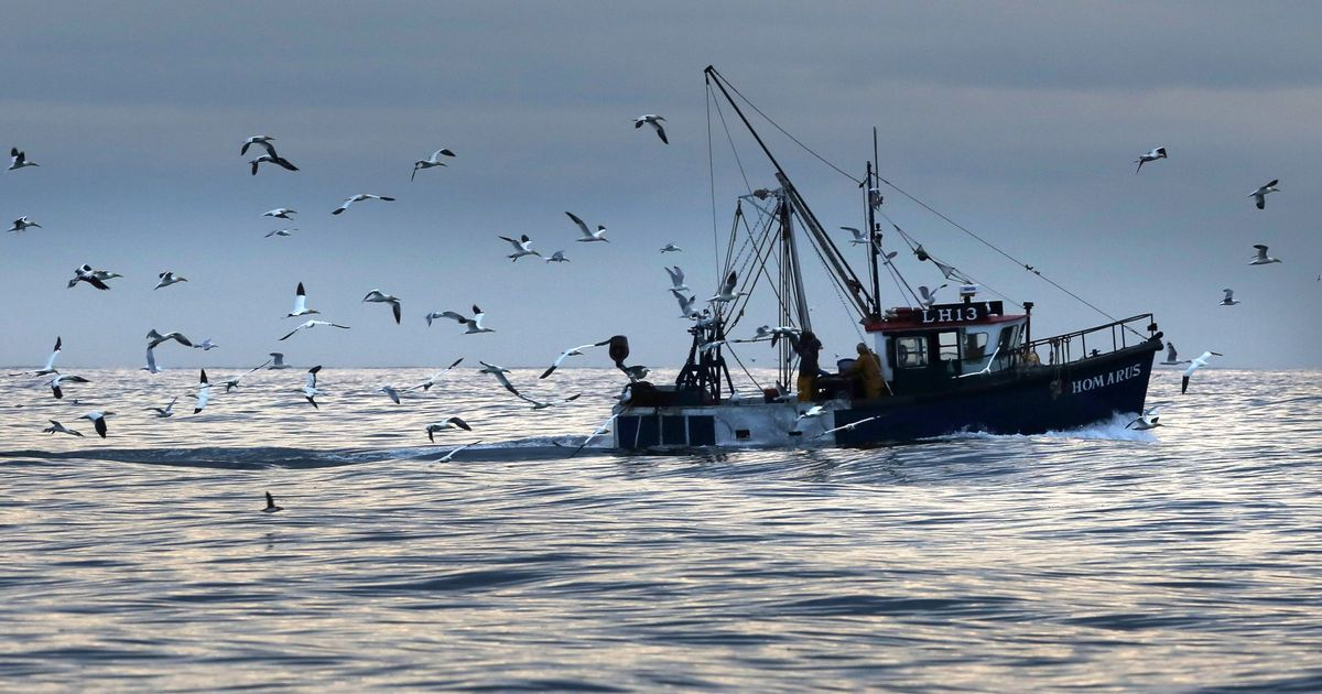 Support fund for UK fishing and shellfish businesses launched